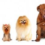 Какая собака вам подходит?