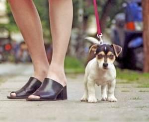 приучить щенка к поводку