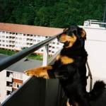 Содержание собаки в квартире