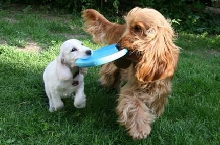 содержание собак