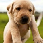 Как подобрать кличку собаке