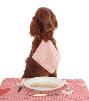 меню для собак
