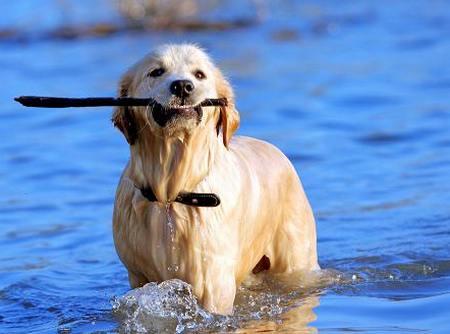 научить собаку плавать