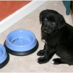 Каким должен быть рацион питания щенка