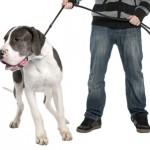 Курс управляемая городская собака
