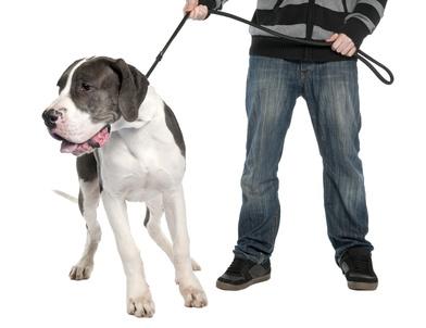 Управляемая городская собака