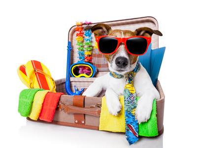 Путешествие с собакой, что необходимо знать