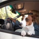 В путешествие с собакой