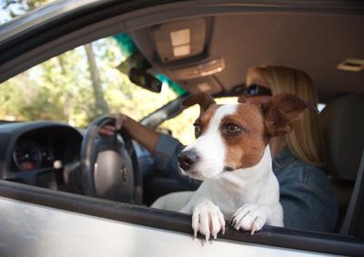 Путешествие с собакой в машине