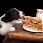 Как похудеть собаке?