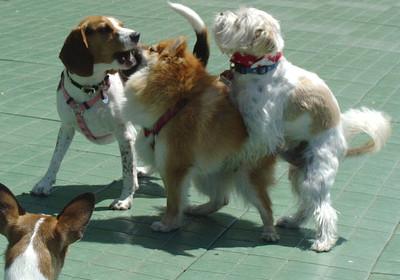 Случайные вязки у собак