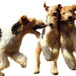Профессиональный корм Bosh для собак