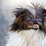 Топ 10 самых страшных собак в мире