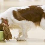 Гипоаллергенные консервы для собак
