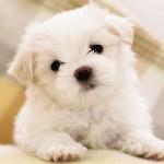 Корма для мелких собак премиум класса