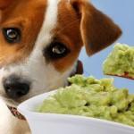 Гипоаллергенные корма для мелких собак