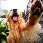 Крем для собак и воск для лап