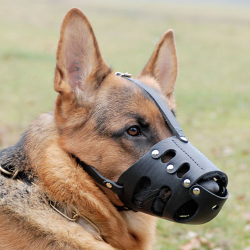 Maulkorb-Leder-Schaeferhund