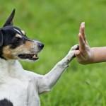 Сухие корма для стерилизованных собак