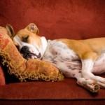 Правильный уход за беременной собакой