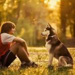 Полезны ли собаки?