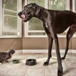 Топ 10 самых крупных пород собак в мире