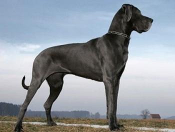 Deutsche_Dogg2