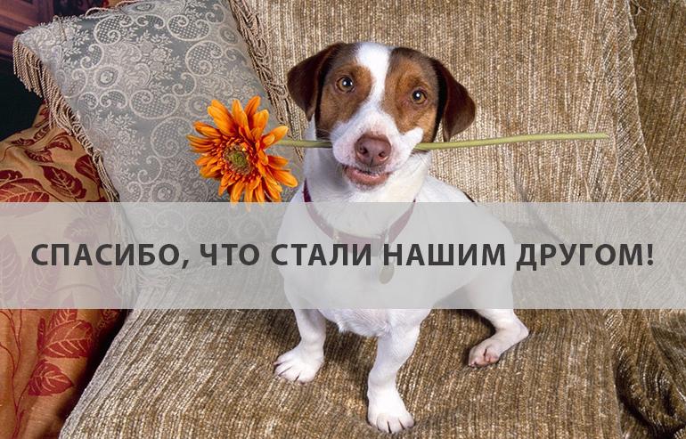 gandex.ru-18509_faff3d8a8bce62755647def011dcab9a