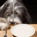 Корм для кастрированных собак