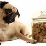 Корм для стерилизованных собак премиум класса