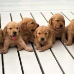 Инструктор по вязке собак – простое решение сложной проблемы