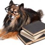 Топ 10 самых умных пород собак в мире