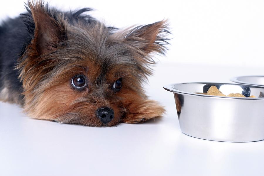 Что делать, если у собаки понос