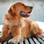 Инсектоакарицидные капли для собак