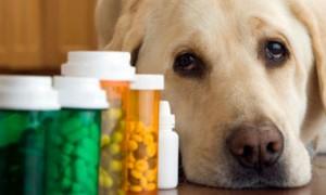 Таблетки от глистов собакам