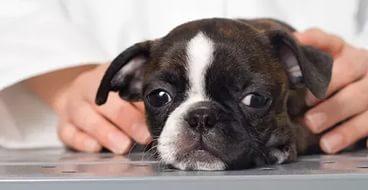 как давать таблетки от глистов собаке