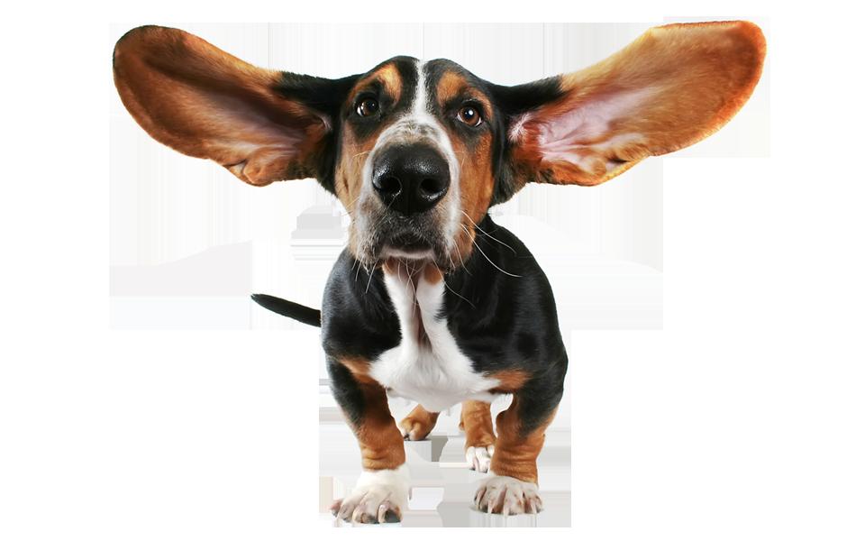 Что делать если у собаки опухли уши