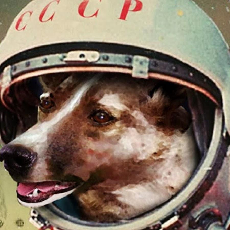 Лайка в космосе, знаменитая собака на весь мир