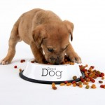 Сухой корм для крупных собак