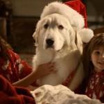 5 душевных комедий про собак