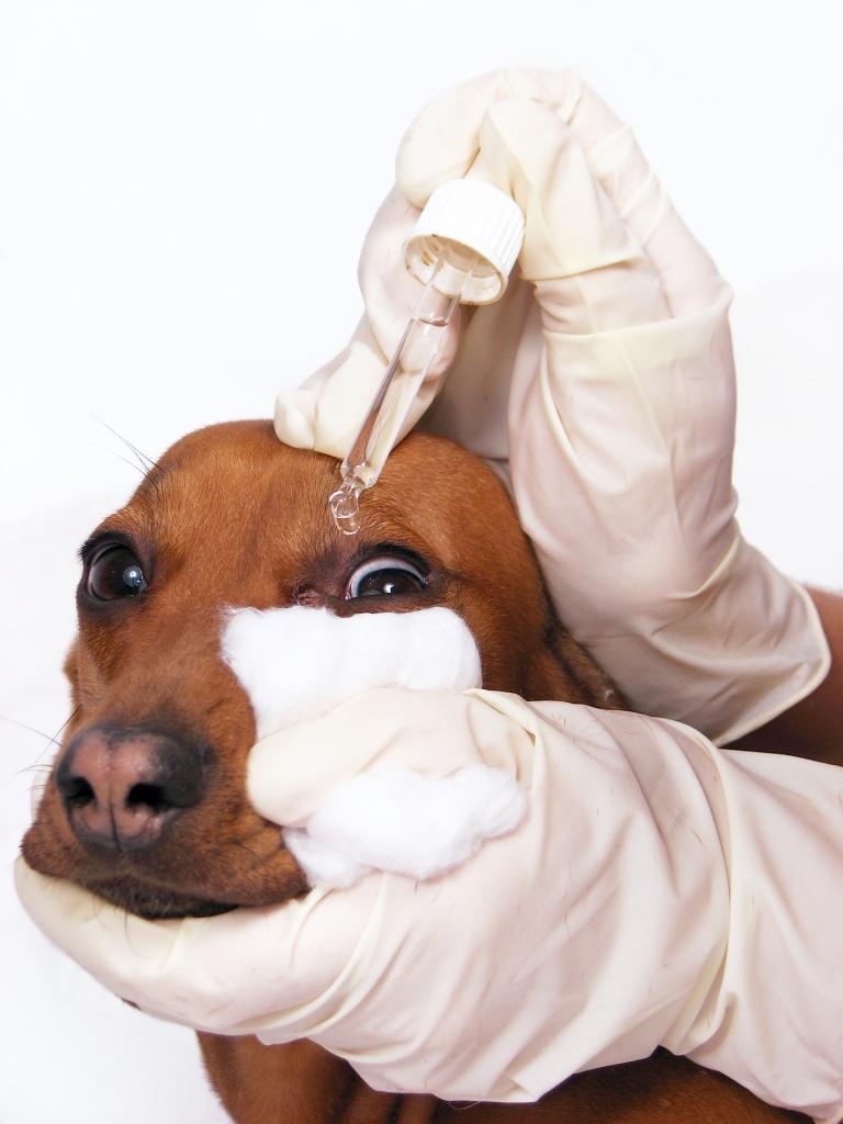 как закапать капли в глаза собаке