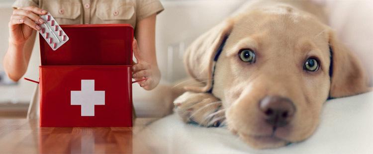 кровавый понос у собаки