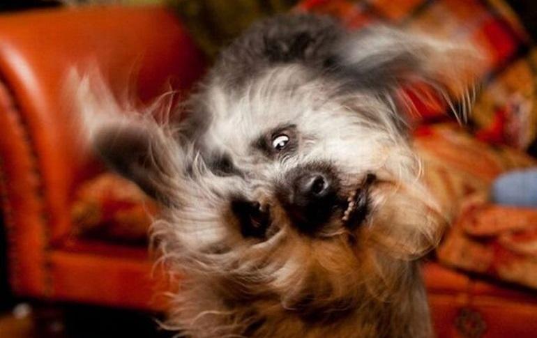 собака трясет ушами