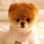 ТОП 10 самых мимимишных собак