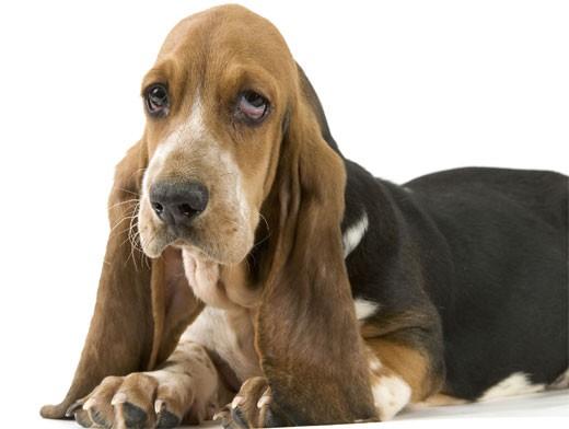 болезни ушей собак
