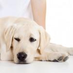 Капли от глистов для собак