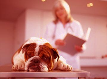 как давать собаке капли от глистов