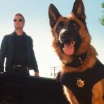 5 фильмов про собак на службе